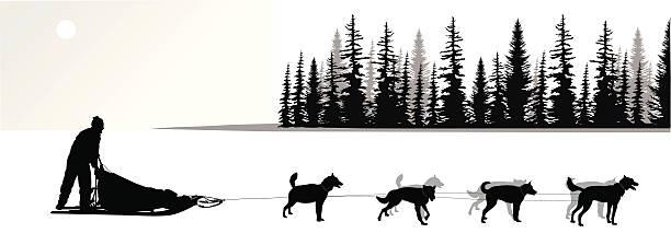bildbanksillustrationer, clip art samt tecknat material och ikoner med dogsled vector silhouette - hund skog