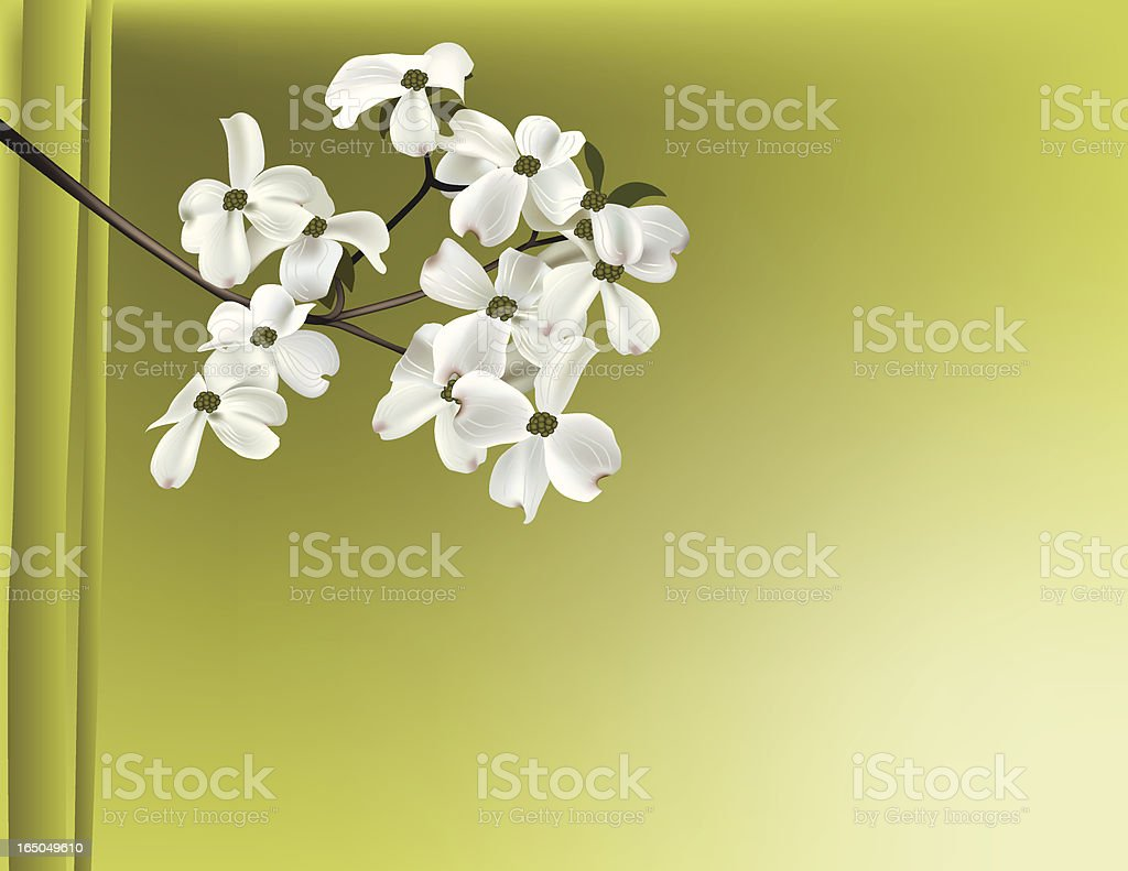 Dogwood branch royalty-free dogwood branch stock vector art & more images of blossom