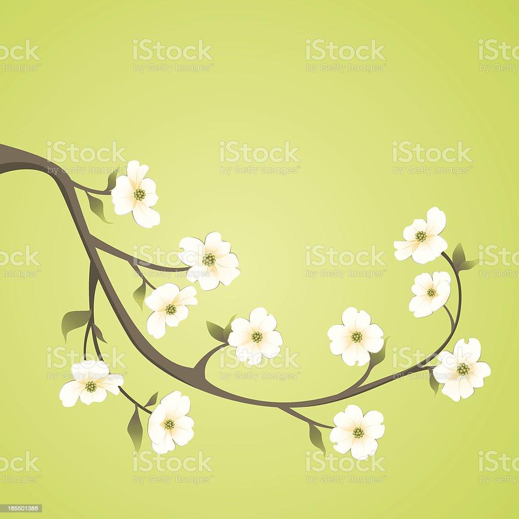 dogwood branch vector art illustration