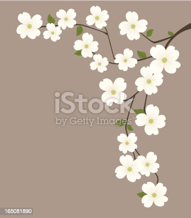 dogwood branch. Related collections: