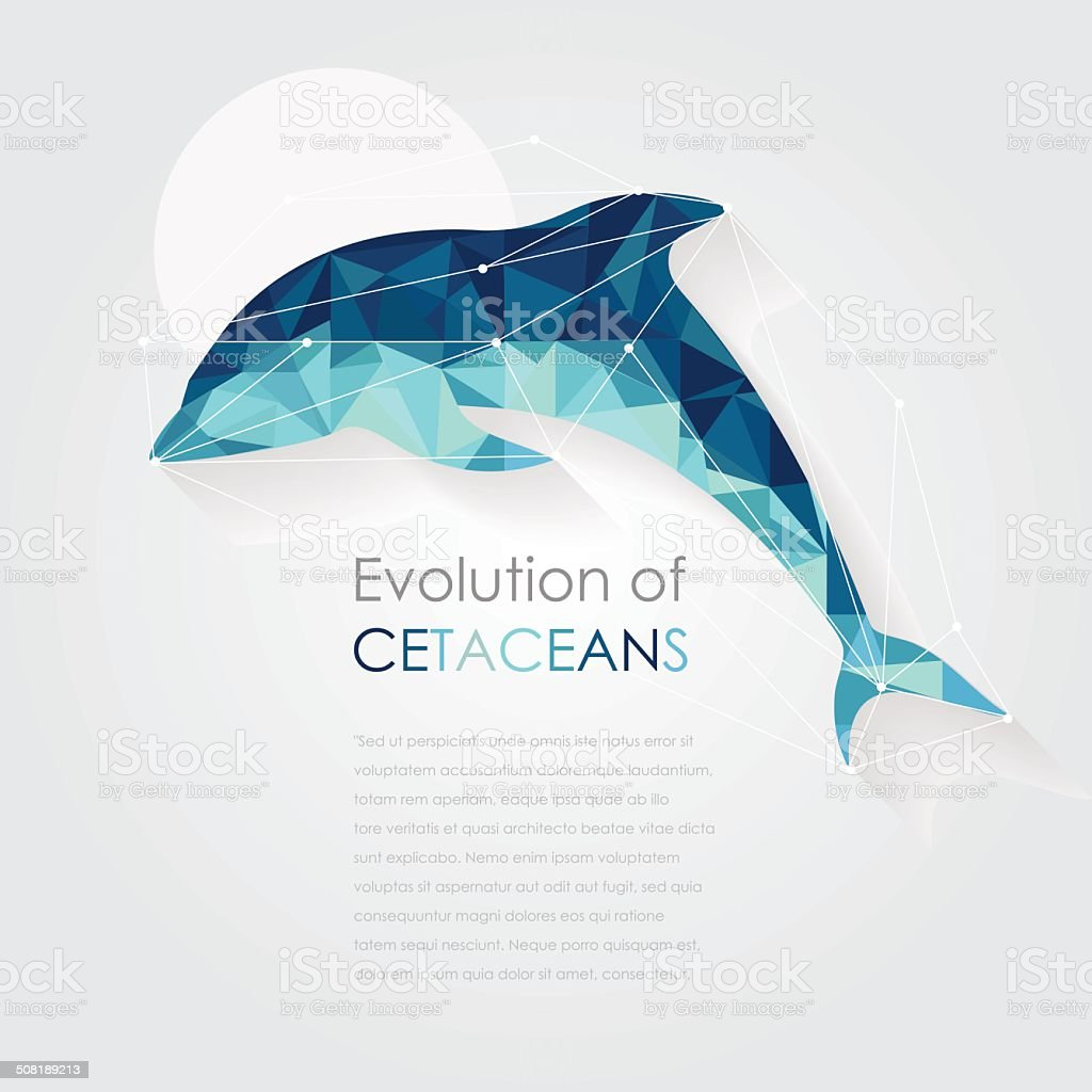 Dolphin Anatomy Vector Illustration In Low Poly Art Style Stock ...