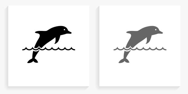 dolphin black and white square icon - dolphin stock illustrations
