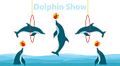 Dolphin show, dolphins jump over the ring and throw the ball. Flat design, vector illustration, vector.
