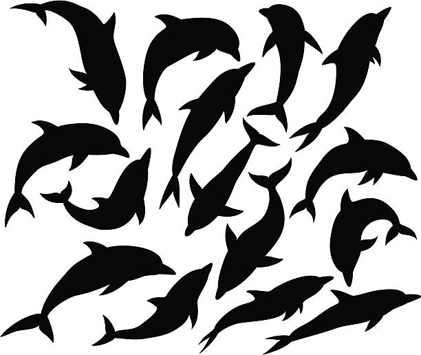 dolphin silhouette - dolphin stock illustrations