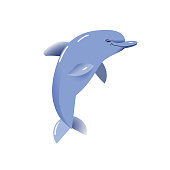 Dolphin vector illustration, isolated object on white background, sea creature.