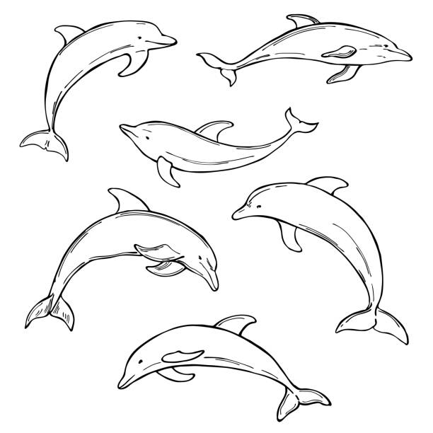 Dolphins on white background. Vector   illustration Hand drawn dolphins on white background. Vector  sketch illustration image stock illustrations