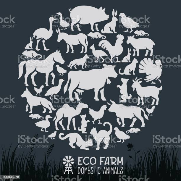 Domestic animals collage vector id696936078?b=1&k=6&m=696936078&s=612x612&h=tzgly77ku7n m5iffr4nhqhccb2se13lxupgqrvb6x0=