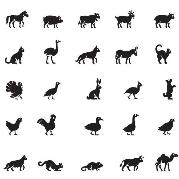 Animaux domestiques Icon Set - Illustration vectorielle
