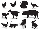 Domestic animals in our yard