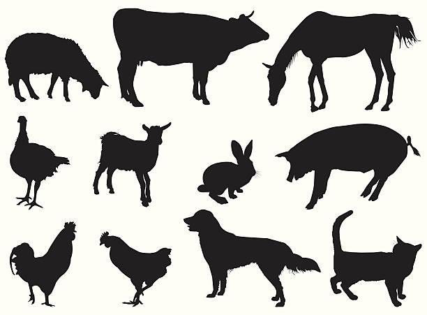 ilustraciones, imágenes clip art, dibujos animados e iconos de stock de animales doméstico - animales de granja