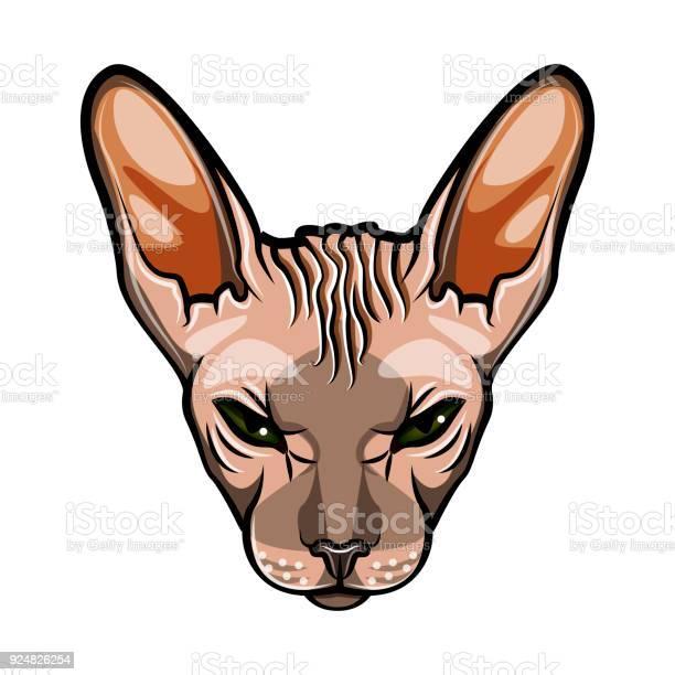 Domestic cat s face sphynx breed comic cartoon style vector isolated vector id924826254?b=1&k=6&m=924826254&s=612x612&h=5zyhmvhube9k l9vqoydzu21jivz6v8svktcpiolgjw=