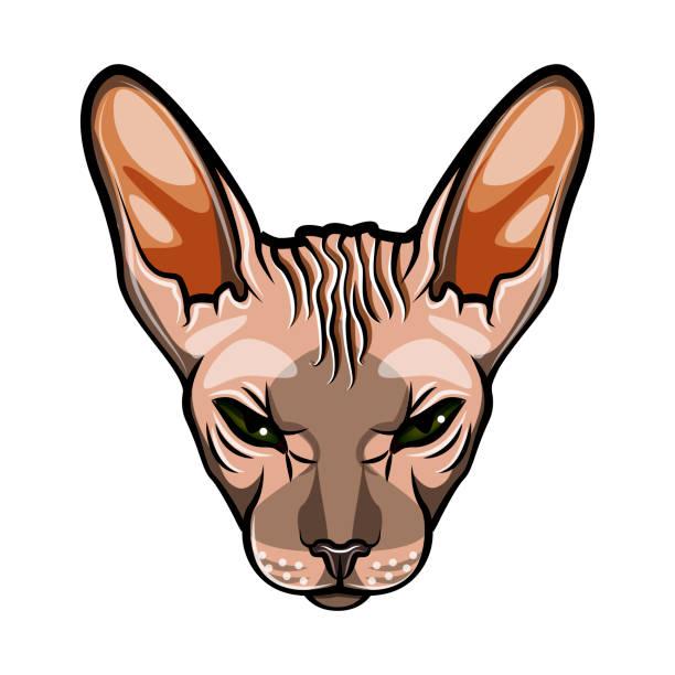 739 Sphynx Hairless Cat Illustrations Clip Art Istock