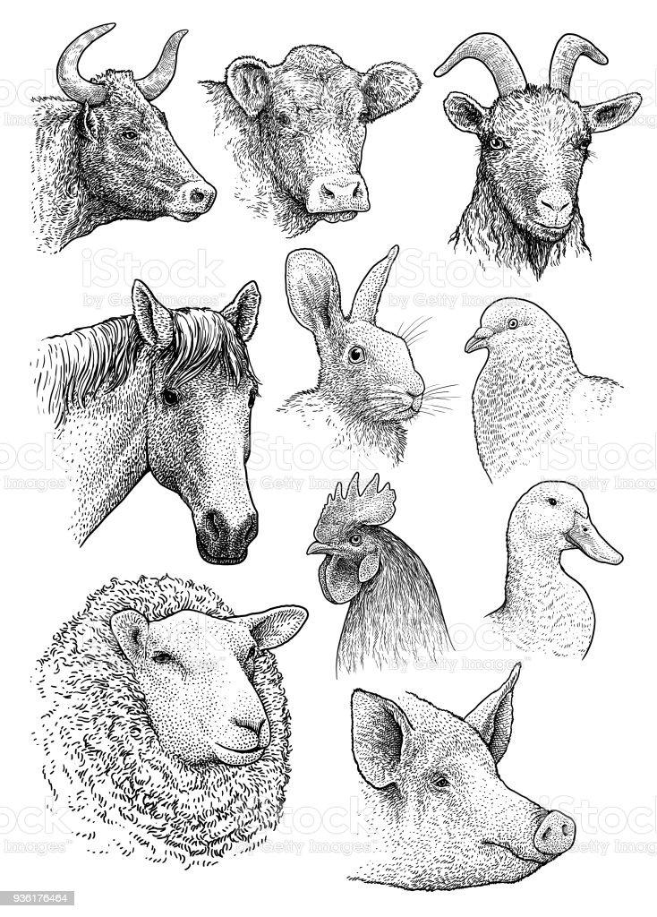 Domestic, farm animals head portrait collection illustration, drawing, engraving, ink, line art, vector vector art illustration