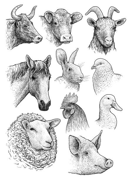 domestic, farm animals head portrait collection illustration, drawing, engraving, ink, line art, vector - food delivery stock illustrations
