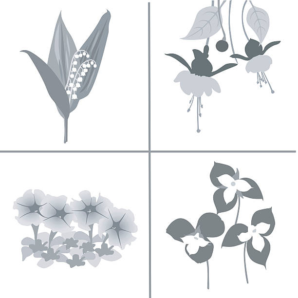 Domestic Flowers A vector silhouette illustration of flower varieties. trillium stock illustrations