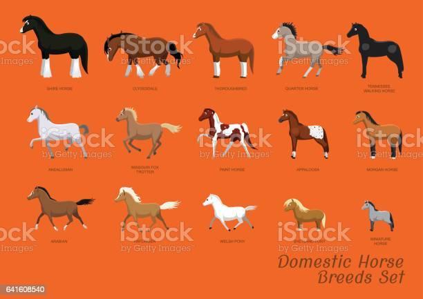 Domestic horse breeds set cartoon vector illustration vector id641608540?b=1&k=6&m=641608540&s=612x612&h=rcgsaltaavhhxat5ivbro9f1nh1kjdvvjyk1wdmhveu=