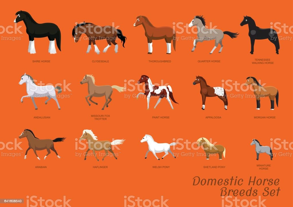 Domestic Horse Breeds Set Cartoon Vector Illustration vector art illustration