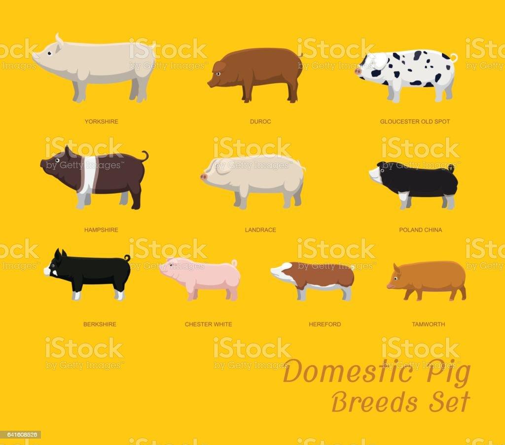 Domestic Pig Breeds Set Cartoon Vector Illustration vector art illustration