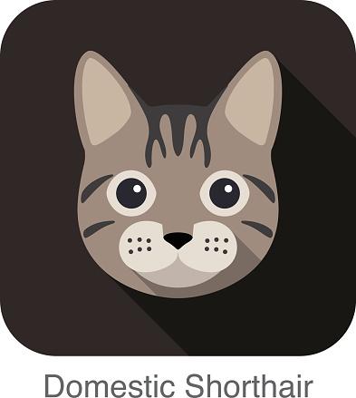 Domestic Shorthair, Cat breed face cartoon flat icon design
