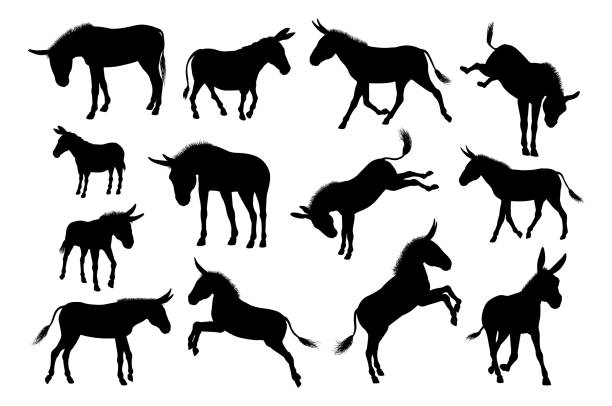 Donkey Animal Silhouettes Set A set of detailed high quality donkey farm animal silhouettes mule stock illustrations