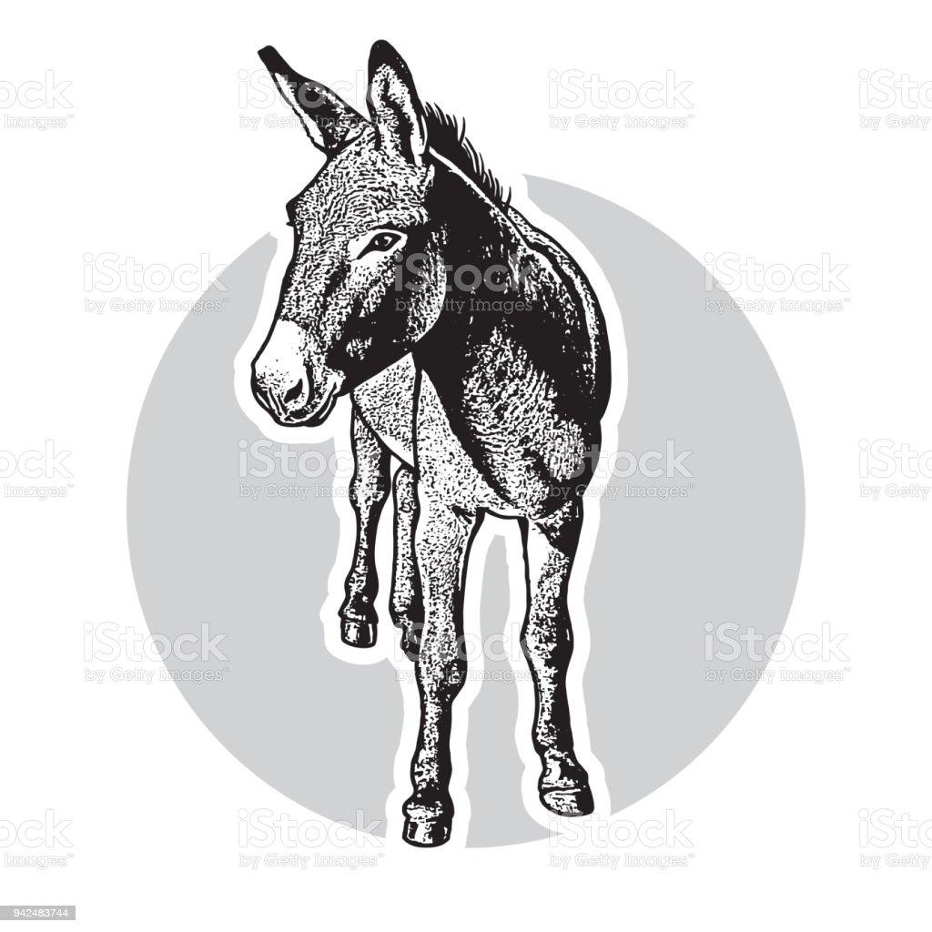 Donkey - black and white portrait in front view. - illustrazione arte vettoriale