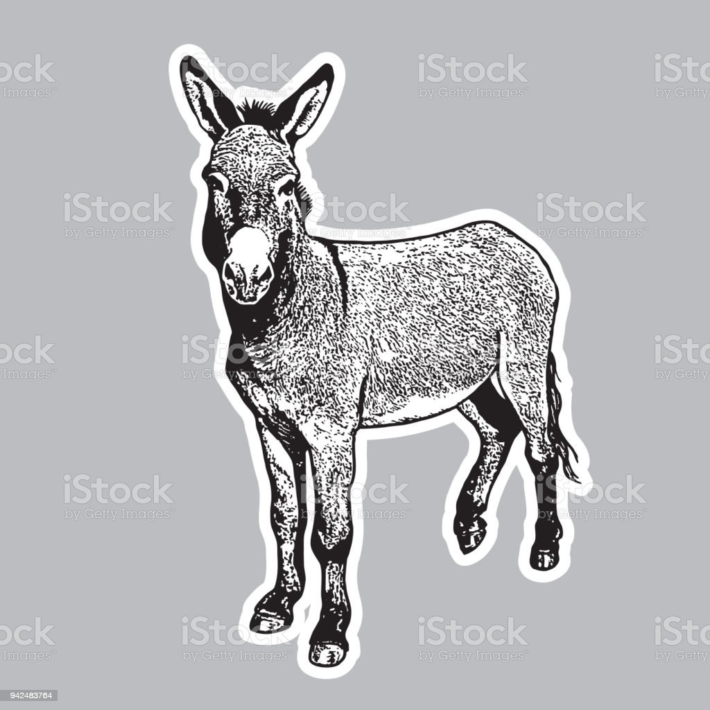 Donkey - black and white portrait in front view. vector art illustration