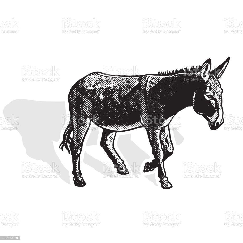 Donkey - black and white side view. - illustrazione arte vettoriale