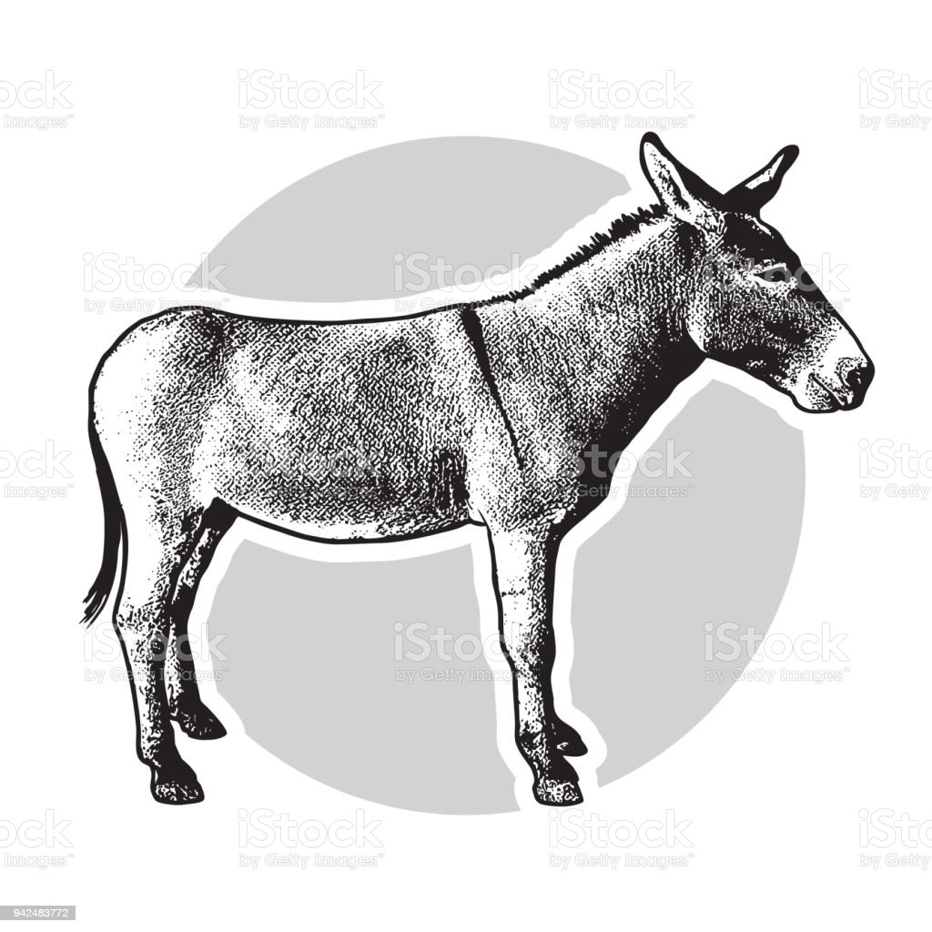 Donkey - black and white side view. vector art illustration