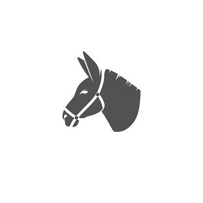 Donkey in harness