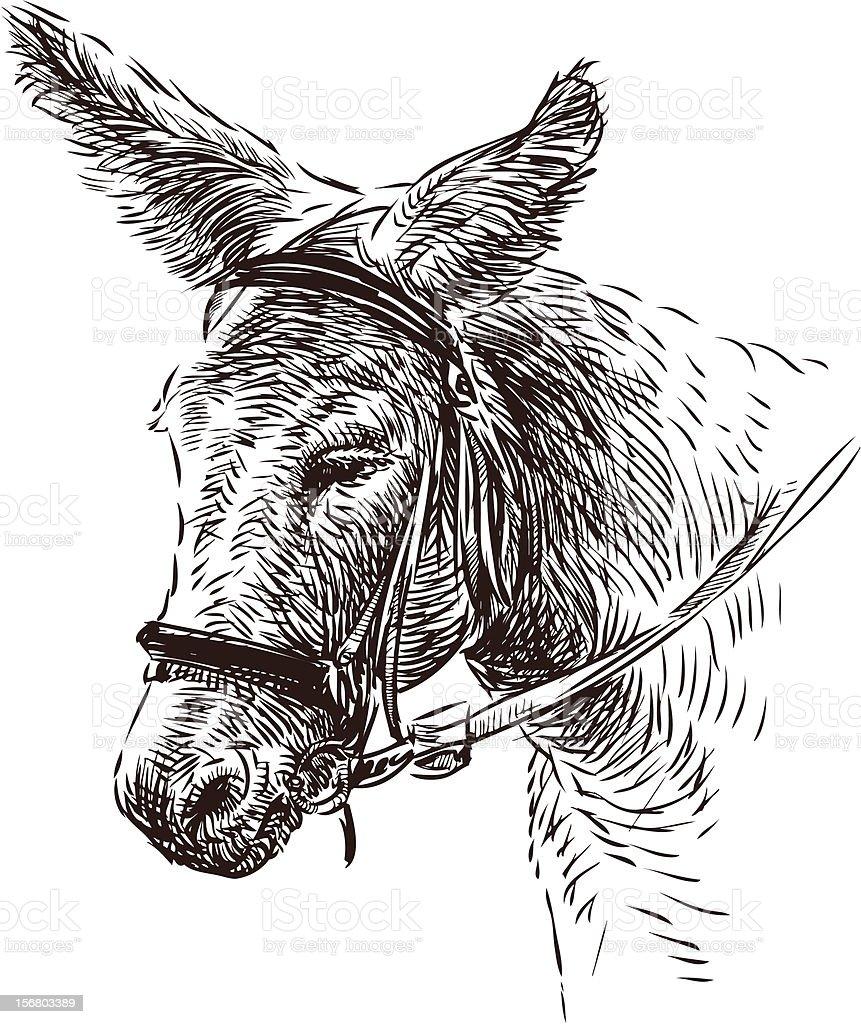 Somaro - illustrazione arte vettoriale