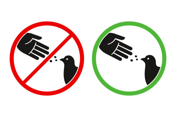 Don't feed birds sign Do not feed the birds warning sign, stylized vector pigeon silhouette and hand symbol in crossed red circle. Feeding animals allowed in green circle. pigeon stock illustrations