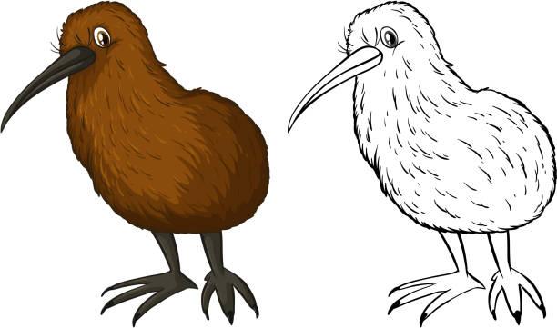 Royalty Free Kiwi Bird Clip Art Vector Images Illustrations Istock