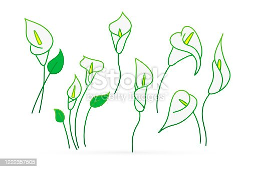 Doodle calla lilies icon isolated on white. Sketch flower. Hand drawing line art. Outline vector stock illustration