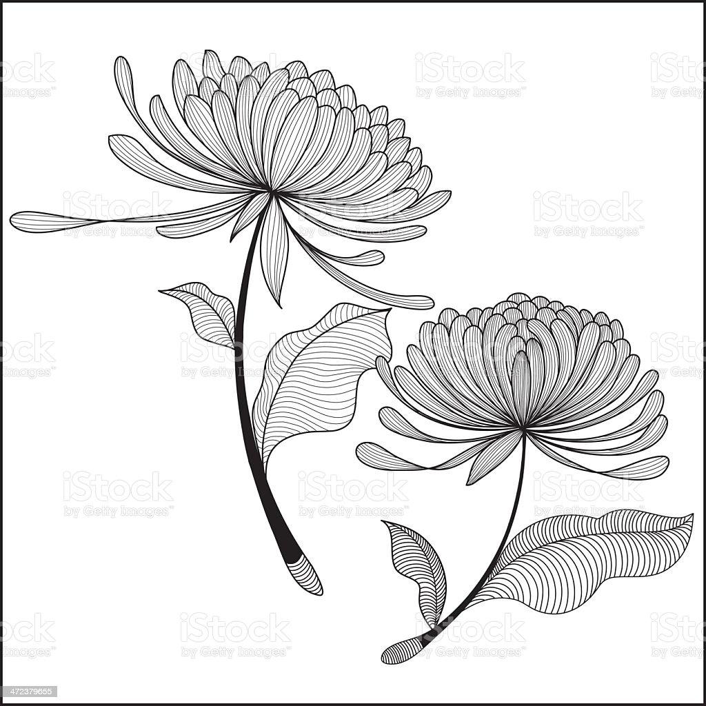 doodle Chrysanthemum-illustration vector art illustration