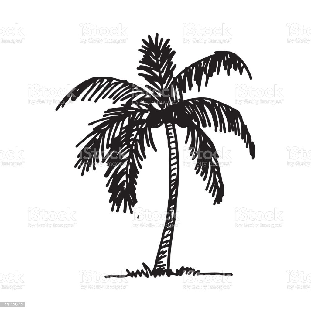 Doodle Coconut Tree Icon Hand Draw Illustration Design Stock Illustration Download Image Now Istock
