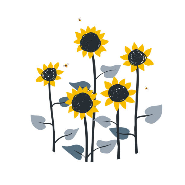 Doodle floral illustration with wild meadow sunflowers, isolated on white background. Vector element for sunflowers honey packaging, label or card template Doodle floral illustration with wild meadow sunflowers, isolated on white background. Vector element for sunflowers honey packaging, label or card template, for book, cover, banner. bee borders stock illustrations