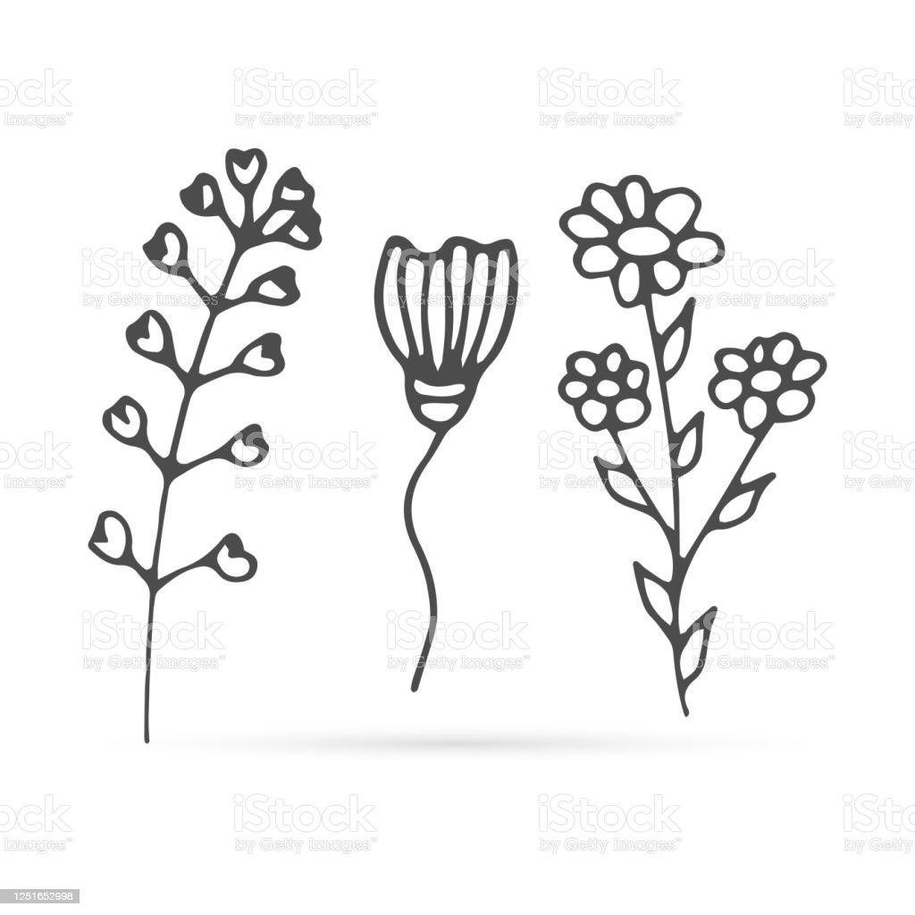 Doodle Bunga Set Ikon Terisolasi Di Putih Garis Anakanak Garis Gambar Tangan Camomole Seni Tas Gembala Untuk Desain Eko Mewarnai Koleksi Sketsa Ilustrasi Stok Vektor Bunga Ilustrasi Stok Unduh Gambar Sekarang