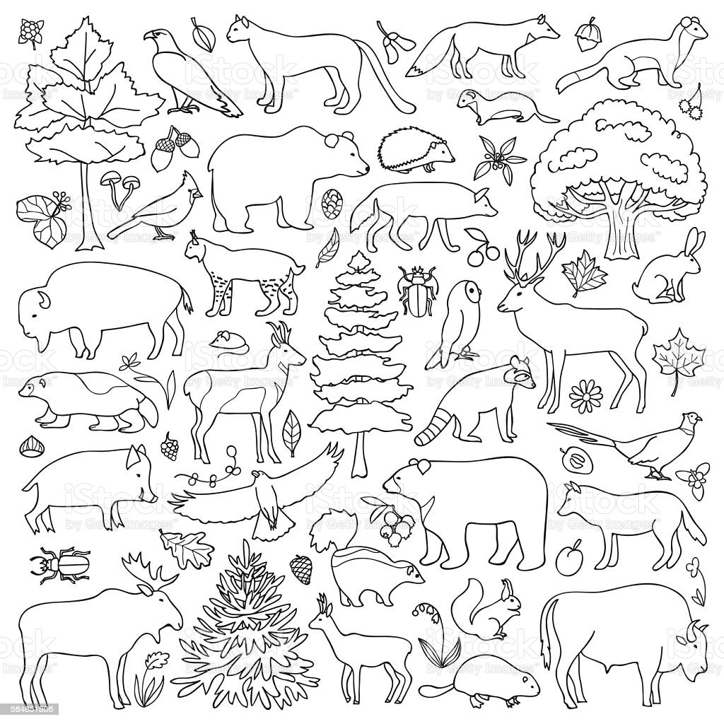 doodle forest animals stock vektor art und mehr bilder von