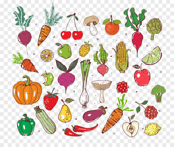 Doodle fruits and vegetables. Doodle fruits and vegetables. Vector sketch illustration of healty food. fruit drawings stock illustrations
