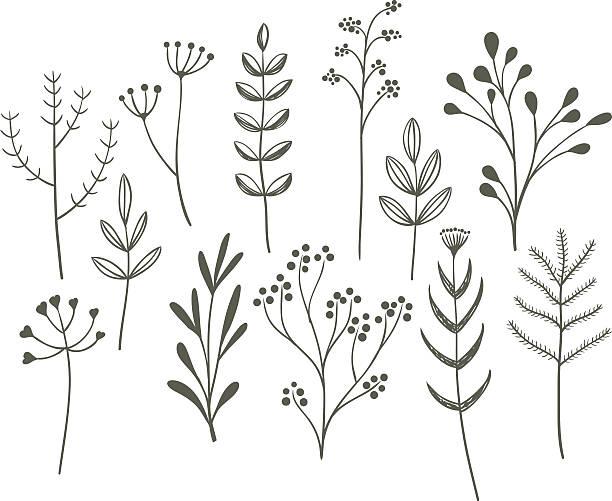 Doodle ensemble d'herbe. - Illustration vectorielle