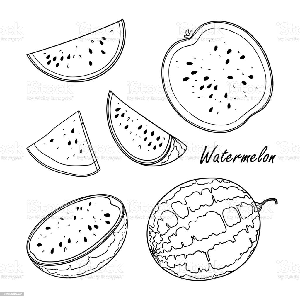 Doodle Illustration Of Watermelon Isolated On White Stock Illustration Download Image Now Istock