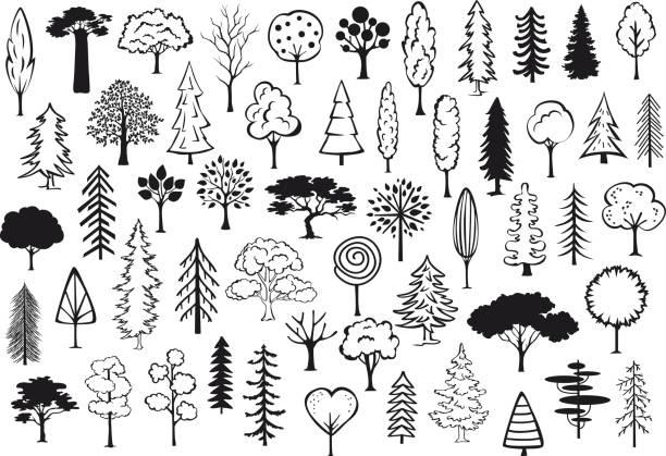 Parque bosque coníferas siluetas abstractas árboles delineado en color negro colección conjunto de Doodle - ilustración de arte vectorial