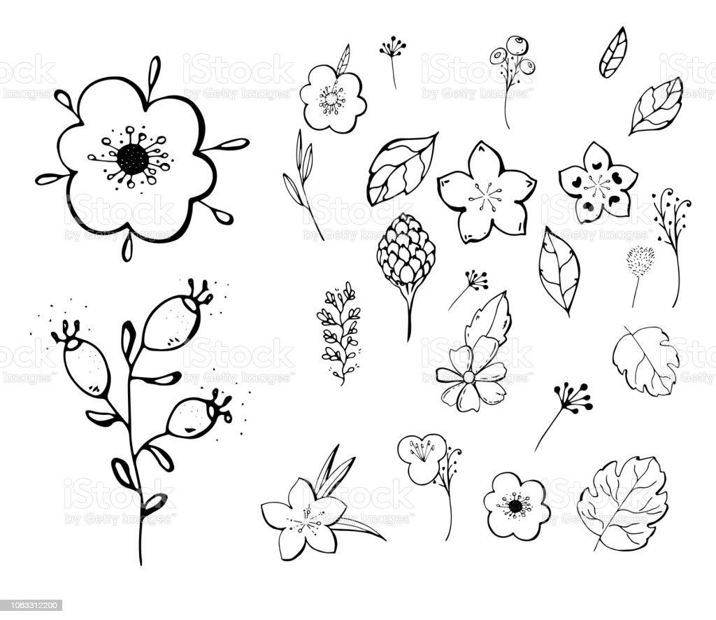 Doodle Croquis Floral Botanique Collection Dessins De Fleurs Noir Et Blanc Avec Lart De Ligne Sur Des Fonds Blancs Illustrations Vector Botaniques