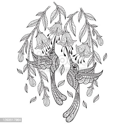 istock doodle Two hummingbird tangles adult coloring page, Illustration  style. 1263517964