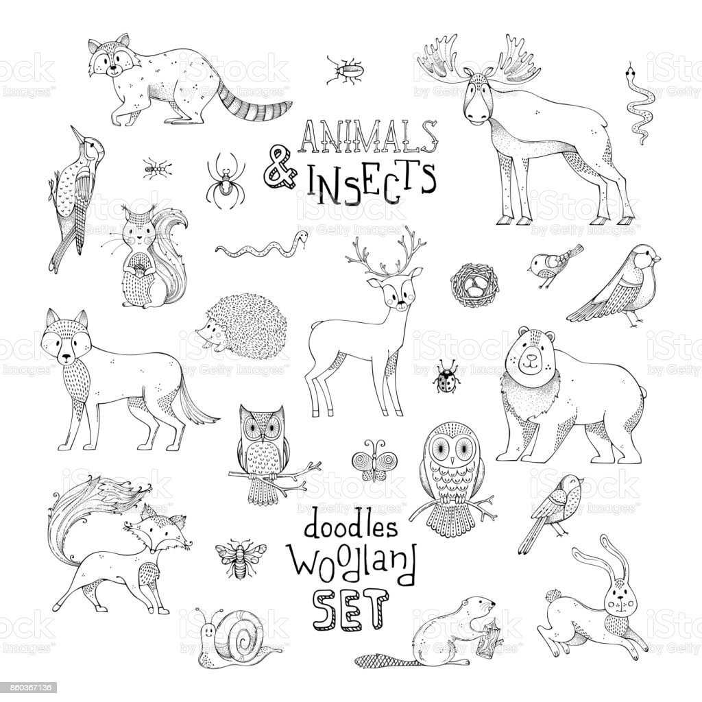 Doodles woodland set of animals and insects. vector art illustration