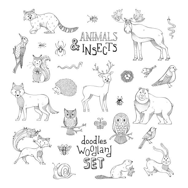 doodles woodland set of animals and insects. - black and white owl stock illustrations, clip art, cartoons, & icons