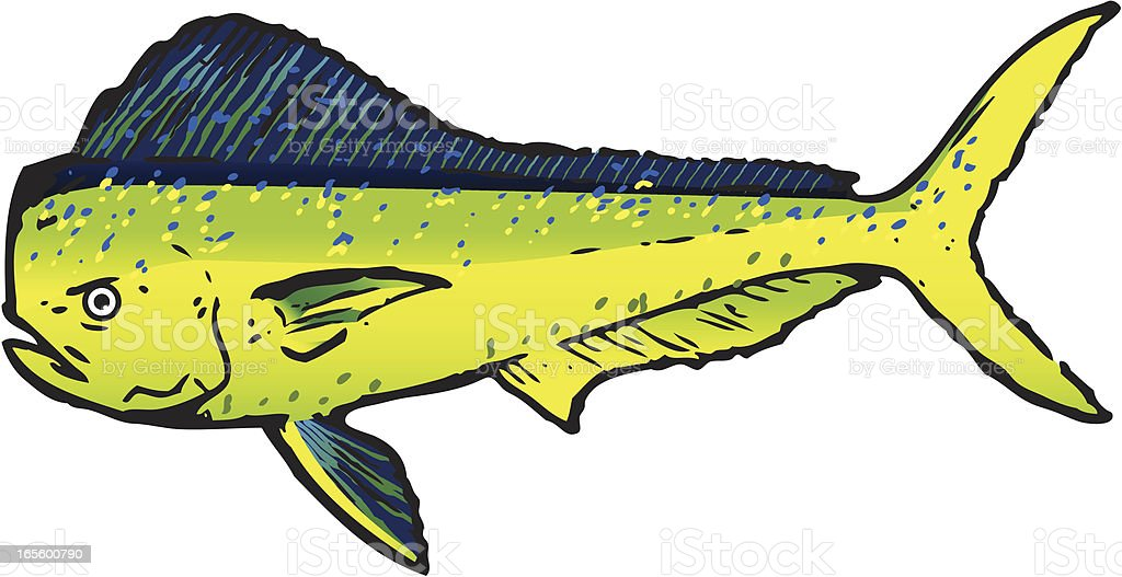 Dorado Sport Fish vector art illustration