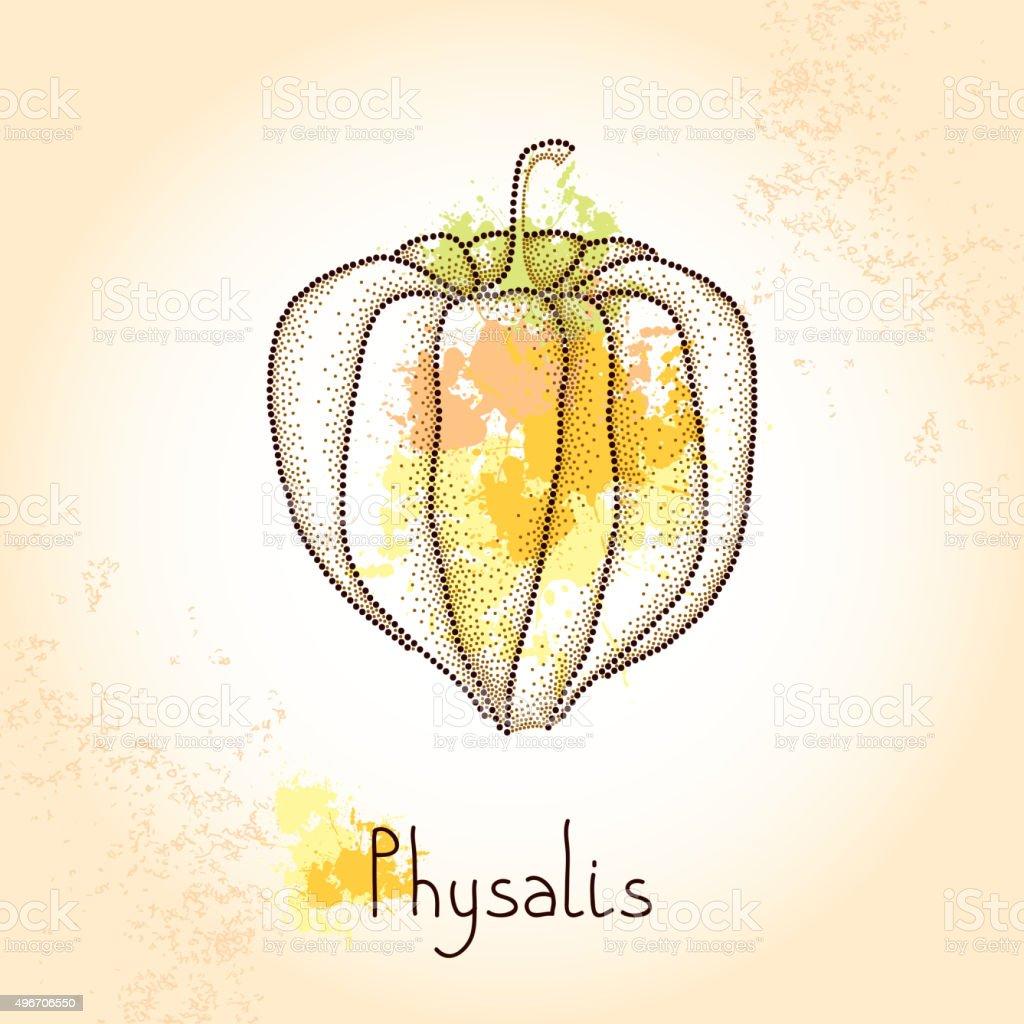 Salpicado Physalis o cabo de gooseberry en la textura fondo beige - ilustración de arte vectorial