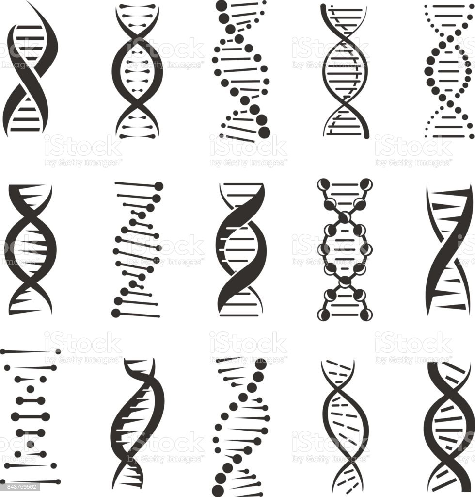 Double DNA helix vector icons vector art illustration