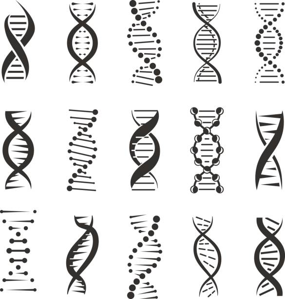 double dna helix vector icons - dna stock illustrations, clip art, cartoons, & icons